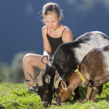 Kind streichelt Ziegen