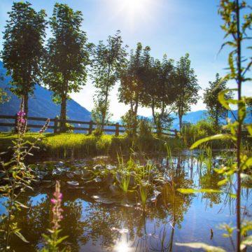 Natursee im Sommer
