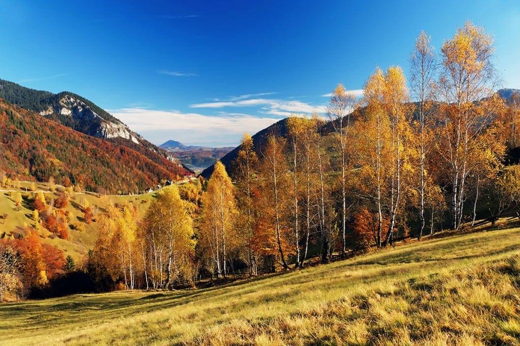 Herbstwald groß